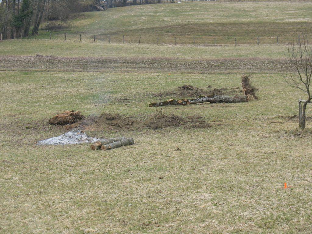 Abattage des arbres sur la parcelle