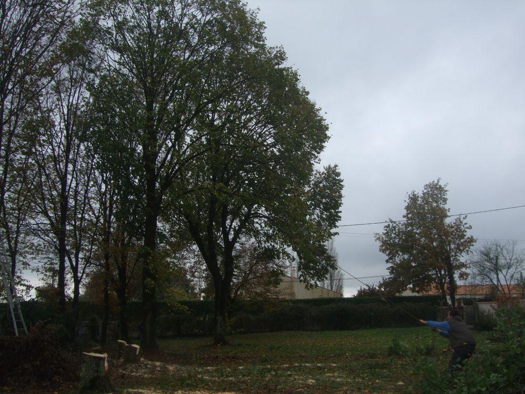 abattage des arbres