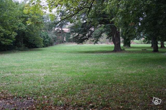 Terrain avant terassement du chemin et coupe des arbres ...