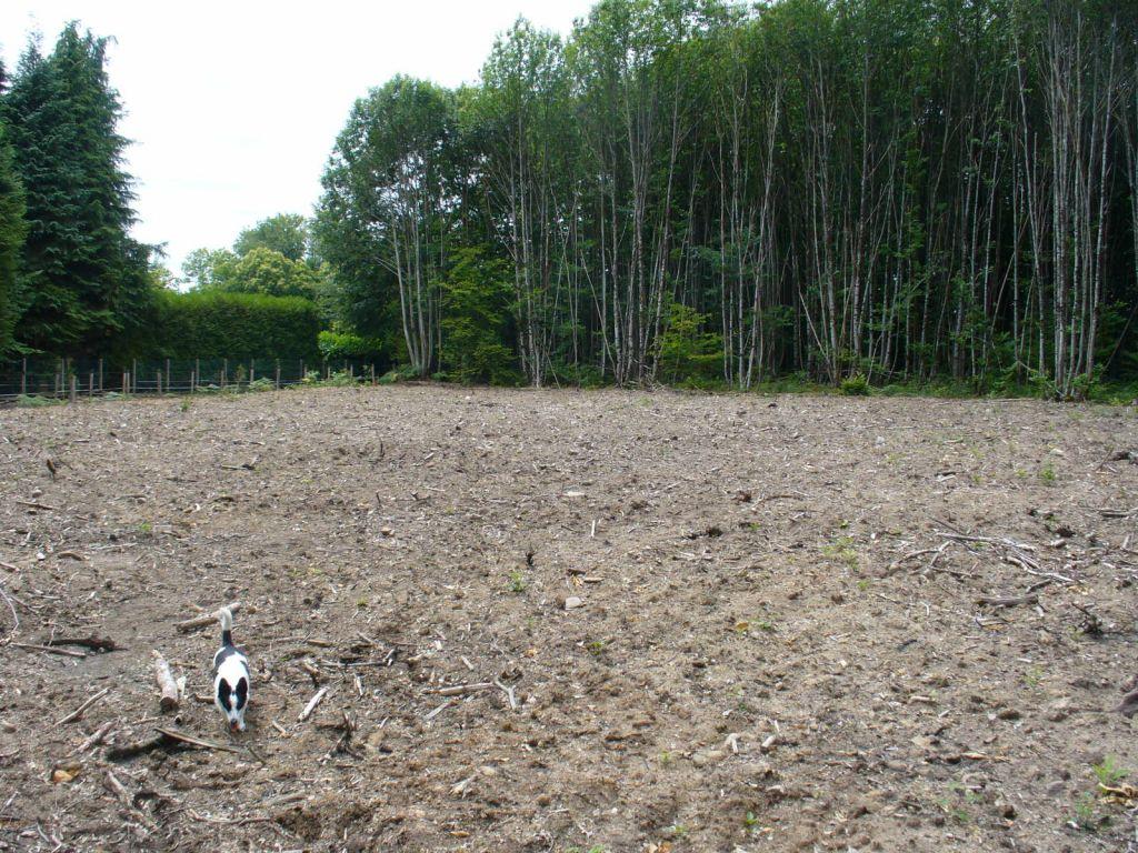 Une vue de la partie déboisée du terrain soit environ 1500m² sur les 3400m²...