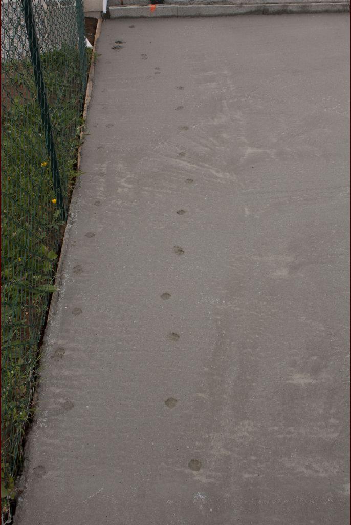Un invité à 4 pattes est venu se promener sur notre terrasse! grrr