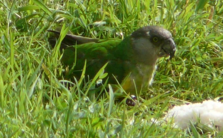 Un visiteur dans le jardin