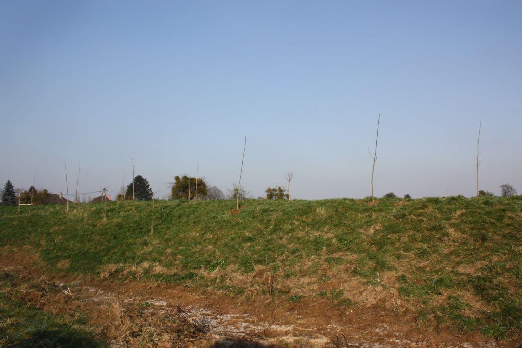 Les arbres plantés par le lotisseur sur notre butte. Ils ont déjà bien grandi depuis l'achat du terrain.