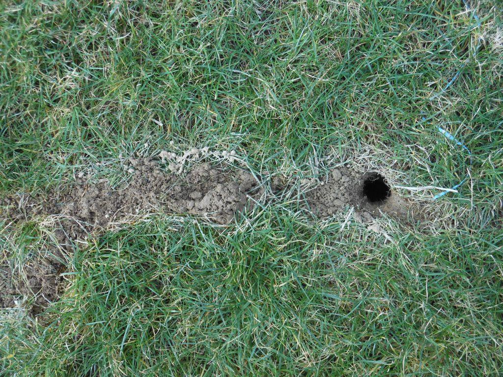 J 39 ai une b te dans ma pelouse 20 messages - Chatiere sans faire de trou ...