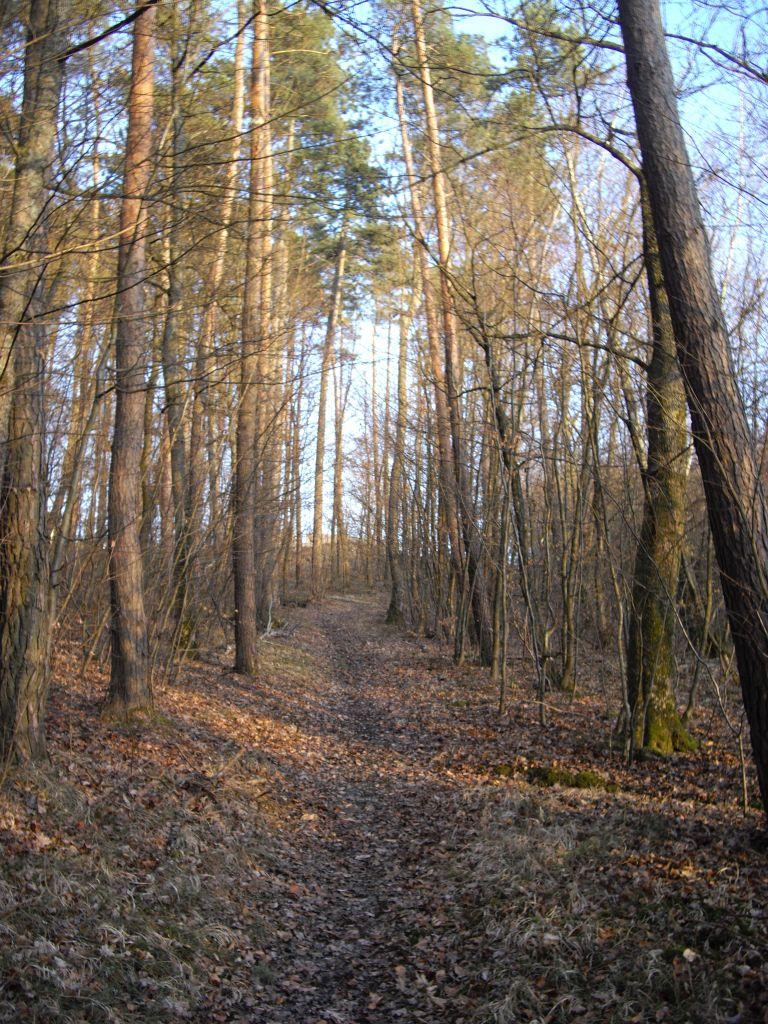 En passant par la forêt ... avec mes jolies bottes ...