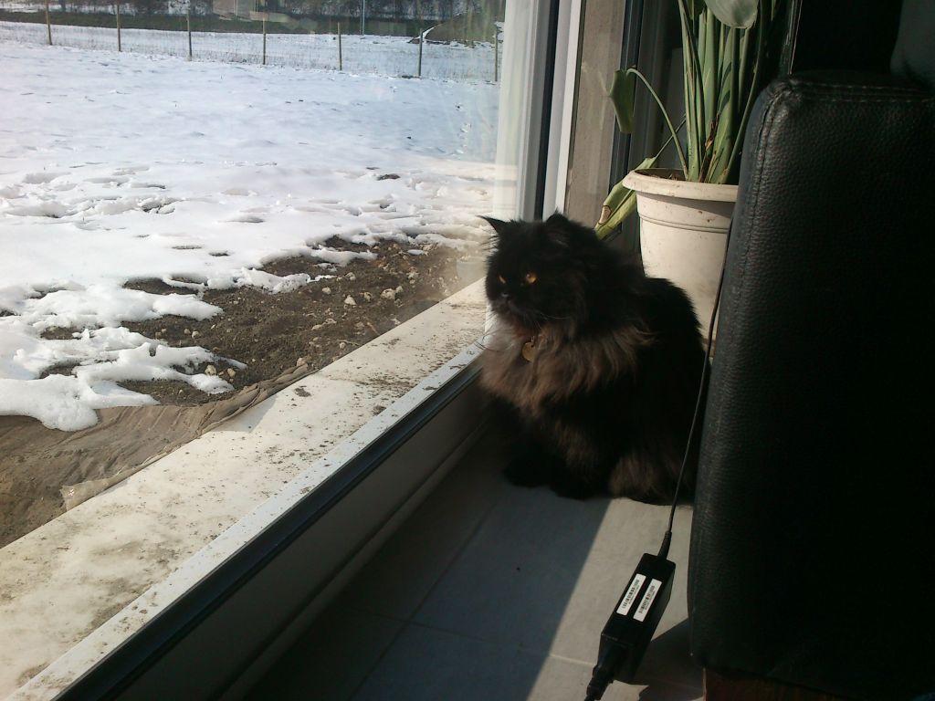 notre maison sous la neige et notre petite Lola qui ne connaît pas