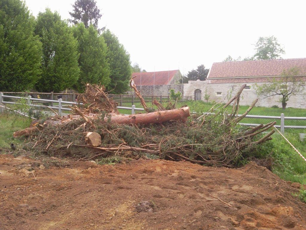 Les arbres ont été abattus