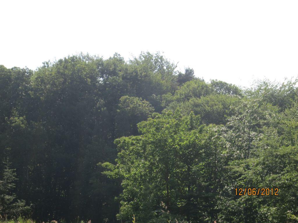 vu sur la forêt que nous avons de notre terrain