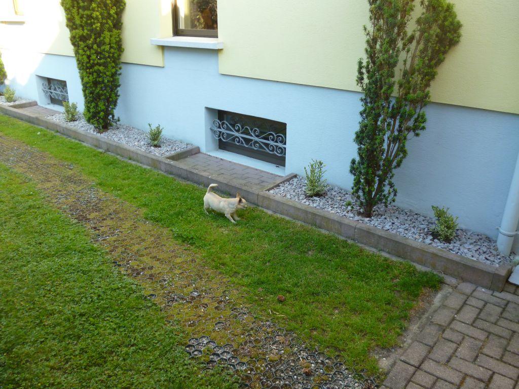 Bande de propret autour de la maison 27 messages - Amenagement terrasse jardin en pente tours ...