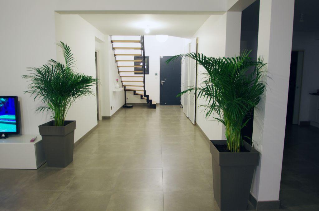 L'entrée et ses plantes (Aceraà
