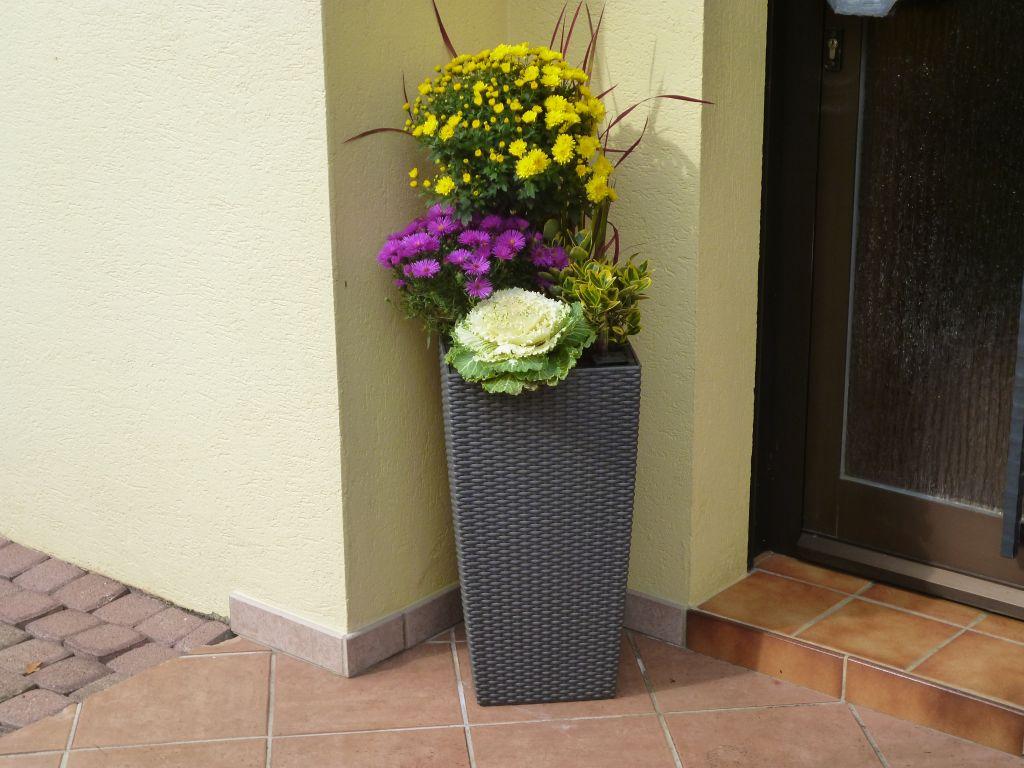 photo composition florale d 39 automne r alis e par mamy v g taux plantation haies haut. Black Bedroom Furniture Sets. Home Design Ideas