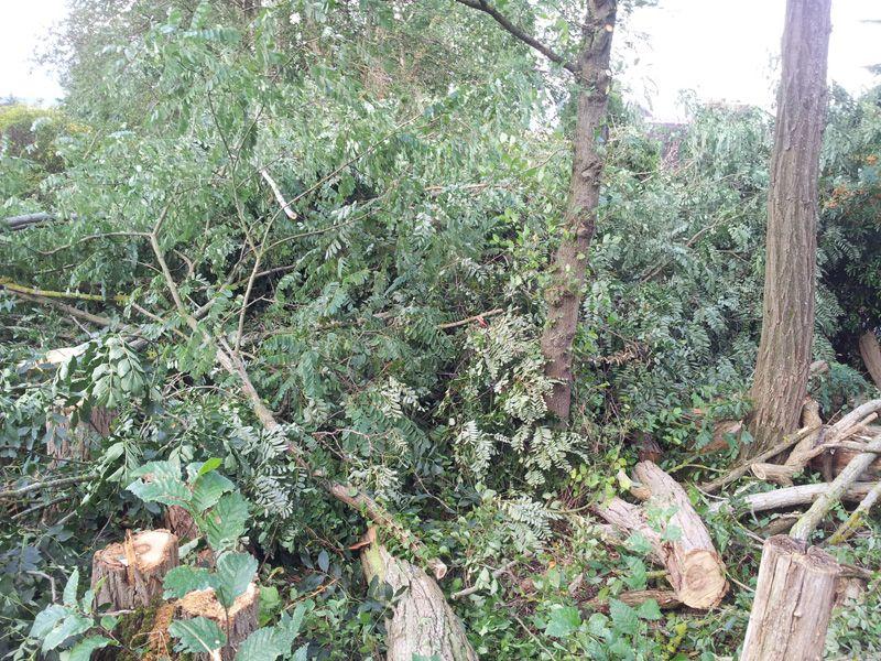 Abattage des 25 arbres