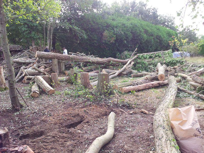 Débitage des arbres en cours