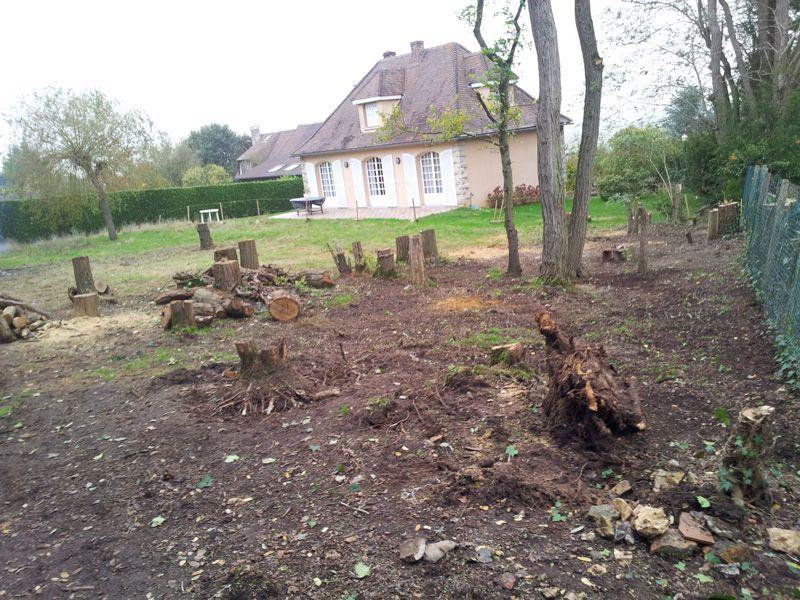 Fin du débitage des arbres