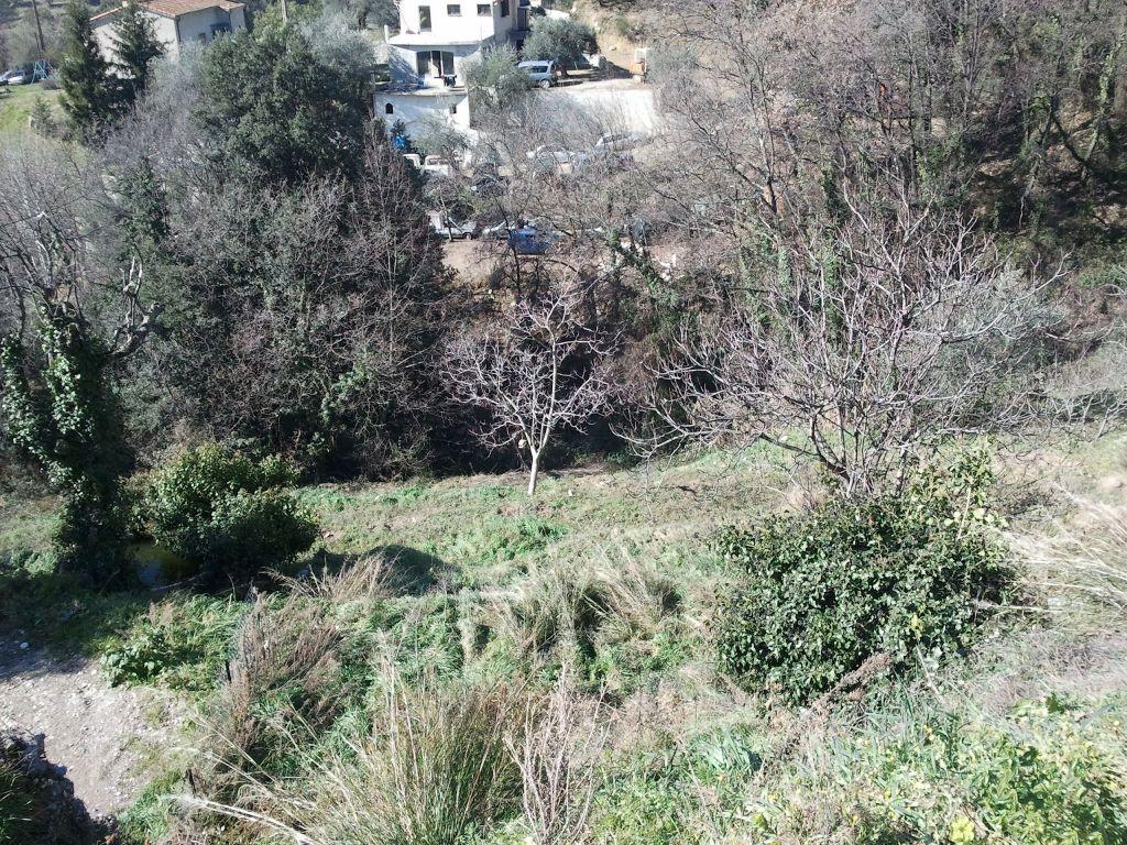 la première Maison sur le terrain  <br />  <br />  <br />  <br />  <br />  <br /> sisi dans l'arbre en bas pour les zozio