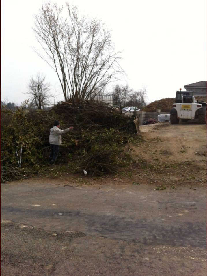 Le tas de branches et le noisetier samedi matin