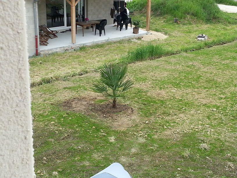 Un petit palmier (65?) pour briser un peu la vue de la baie vitré du voisin, pour lui comme pour nous !