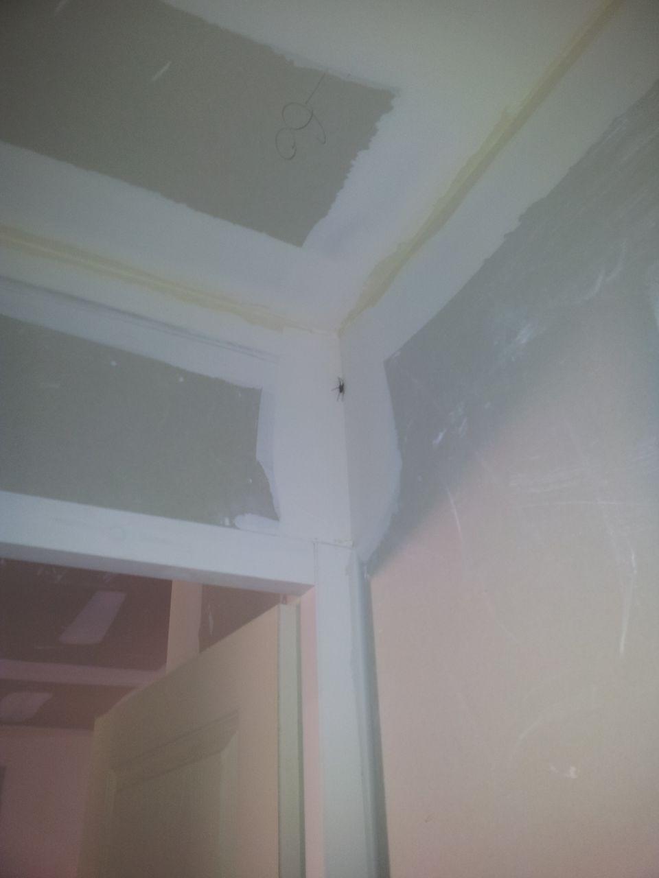 Pr r ception les sanitaires et le ballon thermodynamique sont l shopping plaisir - Une araignee dans la salle de bain ...