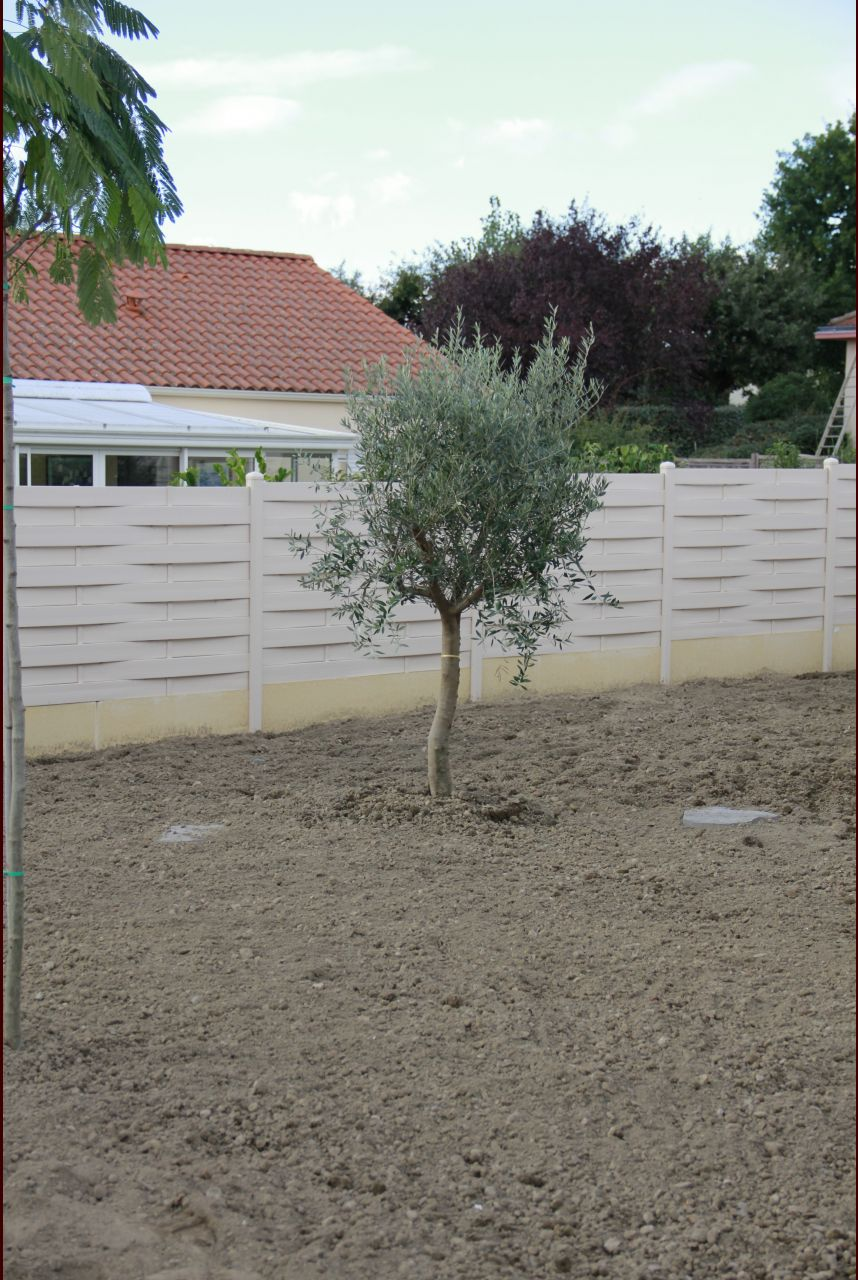 Les plantations enfin pelouse terminado pelouse apr s for Prix pelouse paysagiste