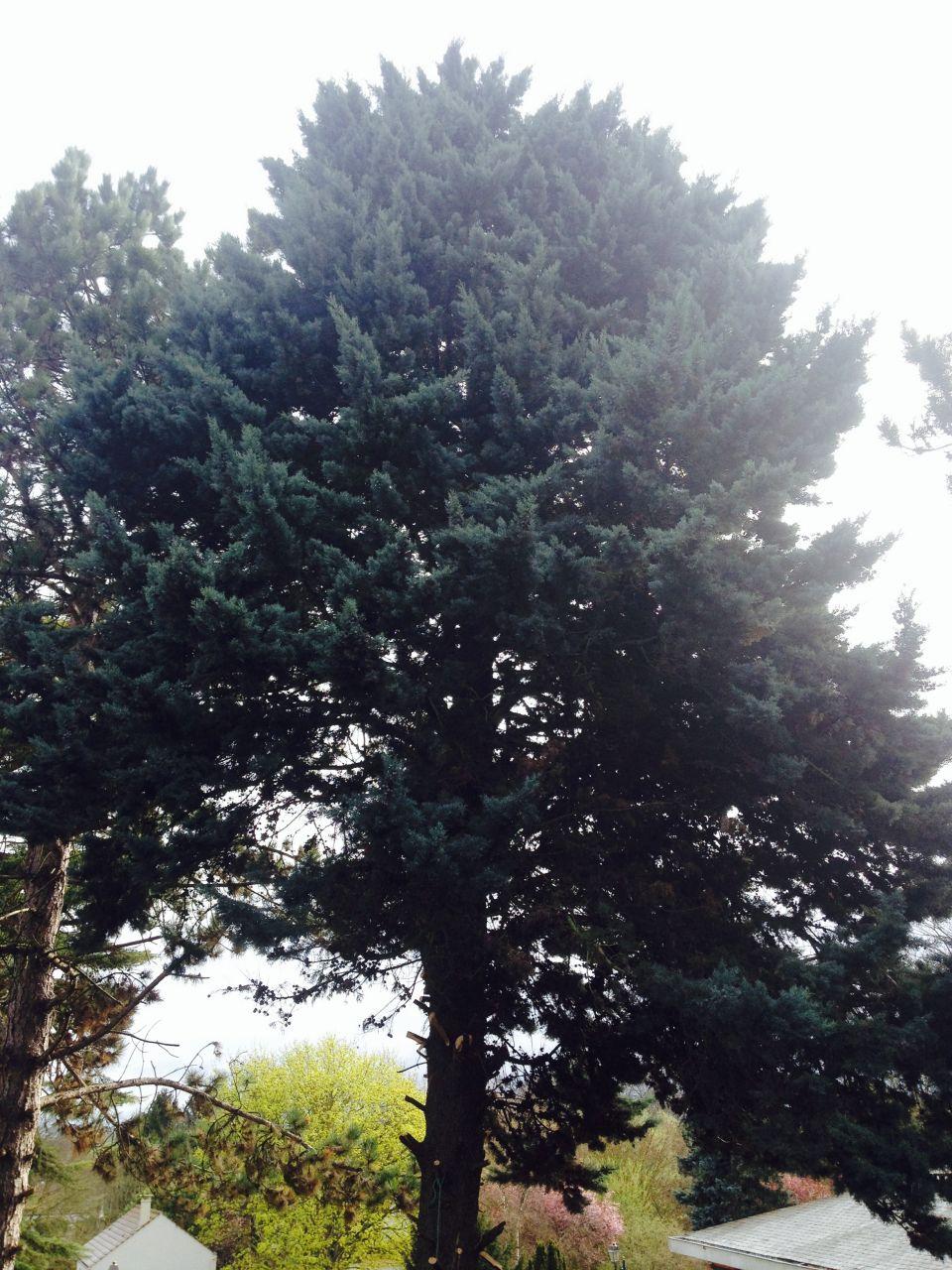 coupe de l'arbre en limite de terrain
