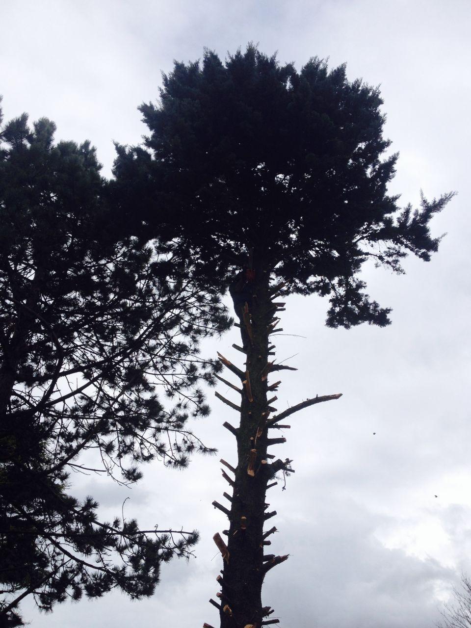 coupe de l\'arbre en limite de terrain