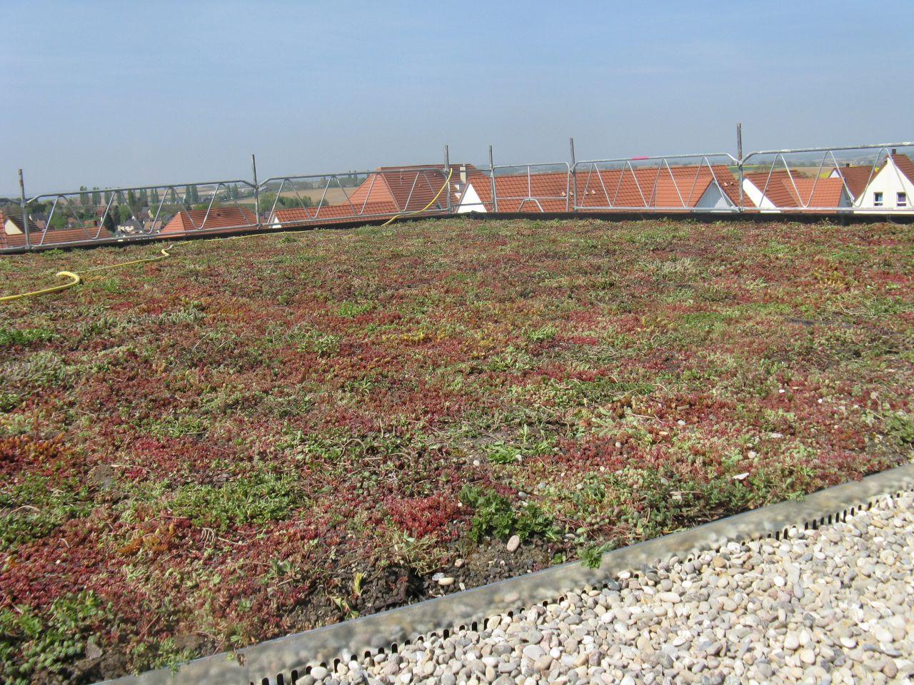 Un jardin au dessus des toits