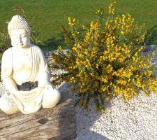 Jardin zen avec le genêt 18 05 2014