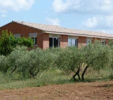 18 mai 2014 acade sud ouest vue de l oliveraie en contre bas