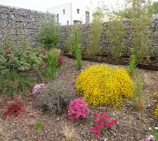 Genet Lydia (jaune), oeillet, lavande papillon et rosier en fleurs