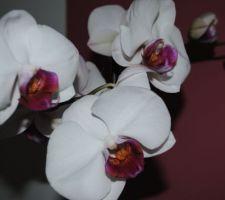 Mes fleurs préférées ont trouvé leur place dans mon bureau