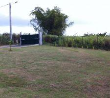 une vue du portail et des buis de chine qui tardent tant a grandir pour faire une barriere naturelle