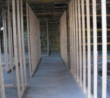 Ma forêt de pins§ le couloir 150cm de large!!