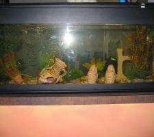 Vu de l'aquarium côté séjour... ne pas faire attention aux traces de doigts !!