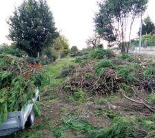 Abattage de la (très) grand haie de thuyas. Plus de 40 arbres coupés par un bucheron, il nous reste à évacuer tout ça !