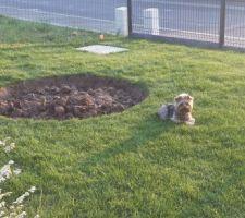 preparation du sol emplacement de l olivier