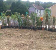 60m de perimetre et choix de 9 essences d arbustes caduc et persistant