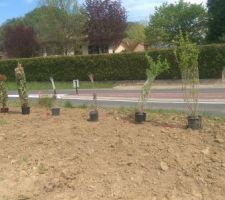 positionnement des arbustes avant planation