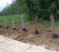 positionnement des arbustes