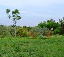 debut mai ca pousse ca fleurit ca devient joli mes plants de tomates seme le 14 fevrier ont bien pousse aussi