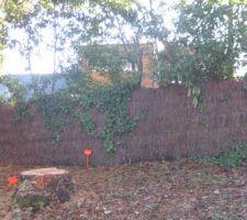 hélas comme on peut le voir sur la photo le premier arbre abattu pour l'entrée du chantier