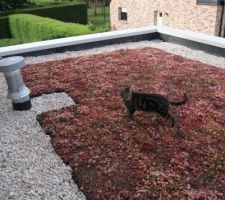 Chat sur toiture un peu dégarnie