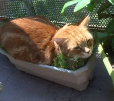 Chat a besoin d'un jardin !
