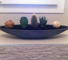 Mini jardinière DIY avec des succulentes et cactus