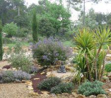 Jardin sec (Var) - yucca pied d'éléphant et céanothe