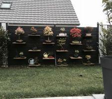 mur de bonsais peint en ral 7016