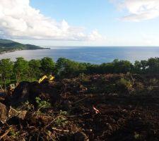 Vue du terrain... les arbres du dessous seront supprimés