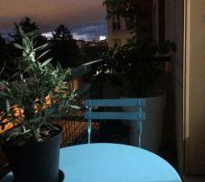 balcon avec son olivier et le citronnier