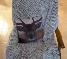 Même le cerf se prête au jeu de la photo