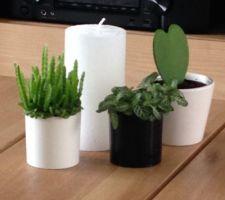 des petites plantes partout