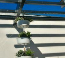 Des plantes en plastique, des pots suspendus ... joli, non ? Merci ikea en tout cas :)